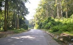 Độ che phủ rừng Việt Nam đạt hơn 40%