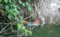 Phát hiện bộ xương nghi công nhân mất tích vụ Sông Bung 2