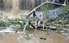 Đi tắm thác, 20 học sinh Ghana bị cây ngã đè chết