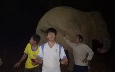 Người dân vô tư chơi đùa với voi rừng