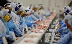 Bê bối thịt bẩn ở Brazil: Con sâu làm vỡ nồi canh