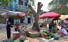 Hà Nội yêu cầu giám sát việc chặt cây xanh khi xử lý vỉa hè