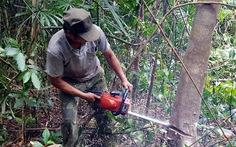 Phú Yêndừng phát rừng chờ Thủ tướng chỉ đạo