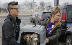 Thoát phận 'cầy tơ', 46 chú chó Hàn đi Mỹ định cư