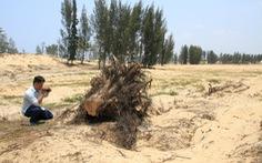 HĐND tỉnh phải giám sát việc phá rừng làm dự án
