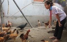 Giúp bạn nghèo từ đàn gà nhỏ