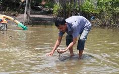 Kiên Giang: Dân thiệt hại nặng vì hải sản chết bất thường