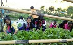 Dạy học sinh Giẻ Triêng trồng rau trên biên giới Việt - Lào