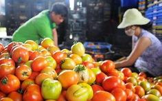 Cà chua - siêu thực phẩm phòng chống ung thư