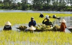 Dân bảo xả lũ gây ngập, chủ hồ chứa nói xả đúng quy trình