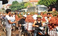 Hà Nội giúp Bắc Giang tiêu thụ vải thiều
