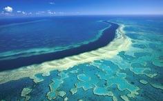 """Rạn san hô Great Barrier lớn nhất Australia đang """"kêu cứu"""""""