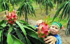 Rau quả tươi Việt Nam vẫn khó tiếp cận thị trường Nhật