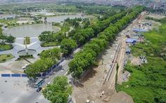 Chặt, di dời 1.300 cây xanh Hà Nội chỉ mới là đề xuất