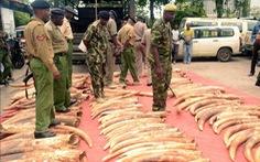 Những vòng ngà voi oan nghiệt - Kỳ cuối: Khuôn mặt tội phạm