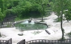 Clip voi lao xuống hồ nước cùng cứu voi con