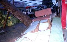 Xà cừ bật gốc trong mưa lớn, nhiều khu vực quận 7 mất điện