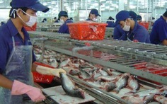 Cá da trơn vào Mỹ bị kiểm tra sớm hơn một tháng