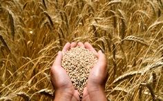 Nhu cầu lương thực toàn cầu sẽ tăng chậm lại trong 10 năm tới
