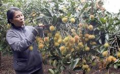 'Ngập chợ', giá nhiều trái cây giảm còn 2.000 - 6.000 đồng/ký