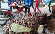 Gà có tiêm phòng vẫn chết vì bệnh dịch ở Bạc Liêu
