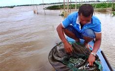 Cấm đánh bắt cá non để bảo vệ nguồn lợi thủy sản