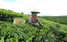 Đất tái định canh bôxit Tân Rai chưa tới tay dân đã 'bốc hơi'