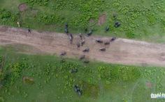 Xứ sở hạnh phúc thành bãi trâu bò nhìn từ flycam