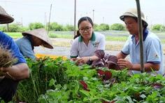 Khởi nghiệp: Rời văn phòng đi trồng rau xanh