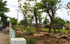 105 cây ở công viên Tầm Vu bứng qua Thảo Cầm Viên