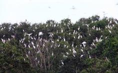 Bản sắc Việt: Khi loài chim không cô đơn