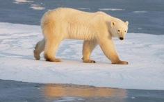"""Để hiểu đúng chuyện """"60% động vật hoang dã bị hủy diệt"""""""