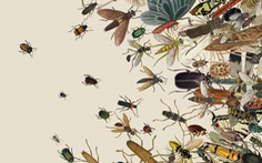 Nếu thế giới không còn côn trùng…