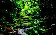 Tìm lại con đường đá cổ Pavie