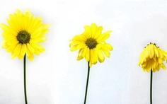 Khủng hoảng trung niên: Tôi đi tìm sự hài hòa