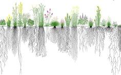 Hiểu một bộ rễ mới trồng được một khu rừng