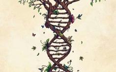 Giải mã gene: Khoa học hay thương mại hóa?