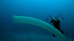 Thợ lặn đứng hình khi gặp 'quái vật biển' dài 8m