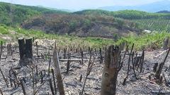 Đã khoanh vùng 23 đối tượng phá hàng chục ha rừng trồng của doanh nghiệp