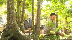 Video: Cây khế 19 thân 'độc nhất vô nhị' ở Đắk Lắk