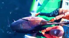 Video: Ngư dân săn cá cờ kiếm nặng 200kg