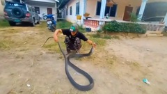 Video: Hổ mang chúa hơn 4m, nặng hàng chục kg 'đi lạc' vào nhà dân