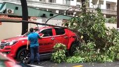 Video: Cây gãy nhánh đè xe bán tải trong mưa lớn ở TP.HCM