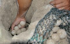 """Hủy án vụ """"116 trứng vích"""" để làm rõ vai trò của kiểm lâm viên"""