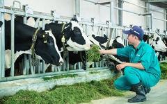 Bên trong trang trại bò sữa chuẩn 'resort' tại Tây Ninh