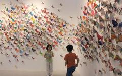 1.300 bươm bướm của những hoàn hảo - khiếm khuyết trong triển lãm ở Hà Nội