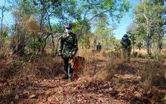 Những chốt chặn dịch trong lòng rừng
