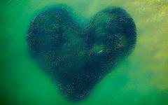 Ảnh 'đàn cá bơi thành hình trái tim' đoạt giải Bức ảnh của năm chụp bằng flycam