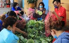 Người trẻ Sài Gòn thuê xe ra tận Hải Dương mua bắp cải về 'bán' giá... 0 đồng