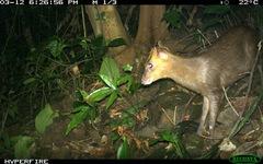 Việt Nam phát hiện loài mang quý hiếm tưởng tuyệt chủng